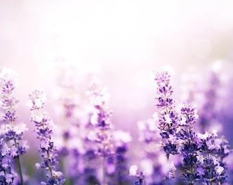 lavender print floral print botanical flower print nature photography decor nursery wall art spring decor lavender field lilac pink purple