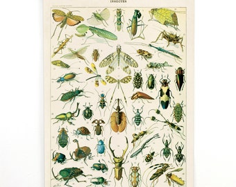 Pull Down Chart - Insects Diagram Reproduction from French Encyclopedia- Canvas Hanging Print. Variety of Insects Chart by Millot. CP255cv