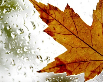 Rainy Leaf - 5x7 print - Nature Photography Print