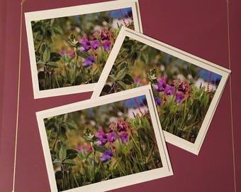 Purple Flowers Cards (3-pk blank greeting cards)
