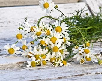 Chamomile Herb Seeds, Herb Garden, Herb Seeds, Herbal Tea, Chamomile Seeds, Kitchen Garden, Drought Tolerant, Organic Herb Seeds