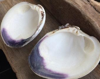 WAMPUM double Shell Ring bowl, Native American Wedding, 2 deep purple double Wampum Shell, DIY Wampum Jewelry, Beach Wedding, shell painting