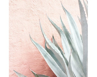 Pink Agave // Cactus Art // Cactus Desert Photography // Nursery Art // Southwest Home Decor // Plant Photograph