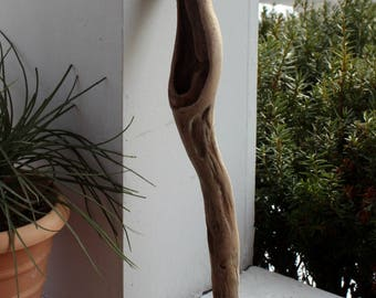 "Driftwood Sculpture / Air Plant Holder 19"" High Curved Natural Artwork"