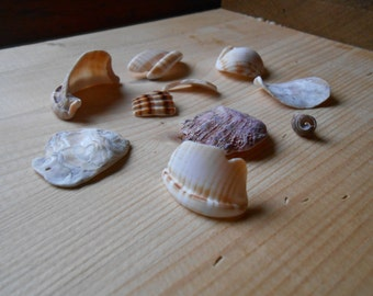 Shell fragments, craft supply, 10 pieces, jewelry supplies, surf tumbled shell fragments C21