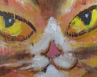 The cat is in, orange tabby.
