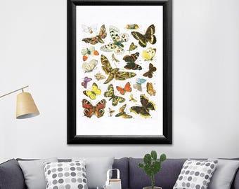 Butterfly wall art, butterfly poster, butterfly art, butterfly decor, butterfly print, butterfly art print, bug art hanging, bug art print