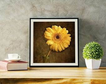Yellow Gerbera, Botanical Prints, Flower Photographs, Flower Wall Art, Romantic Art, Square Print, Nature Art, Flower Wall Decor
