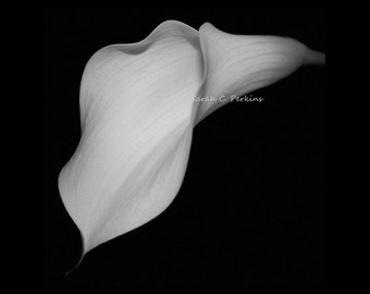 Flower Photography-Black & White Photography-Square Wall Art-Calla Lily-Floral Photography-Fine Art Print-8x8/10x10/12x12/16x16/20x20