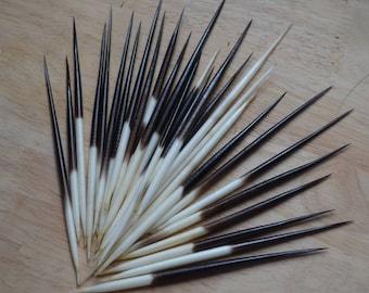 African Porcupine Quills