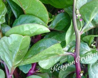 Summer Spinach Malabar Climbing Vine Heat Loving Tropical Variety Excellent Flavor Rare Seeds