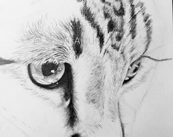 Tabby cat face - print of original graphite drawing
