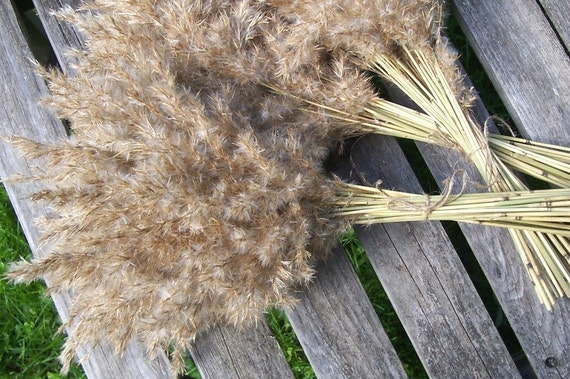 Decorative grass reed grass floral arrangements dried for Dried flowers craft supplies