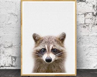 Racoon Print, Baby Animal Prints, Baby Decor, Baby Wall Art, Baby Room Decor, Animal Prints, Animal Art, Baby Animal, Nursery Animal Print