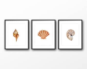 Set of 3 watercolor seashells print - Sea Shell art - Digital seashell artwork - Sea inspired art work - seaside prints - seashell decor