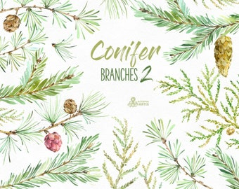 Conifer Branches 2. Watercolor floral clipart, pines, cones, forest, spruce, fir, woodland, wild, coniferous, wedding invitation, diy