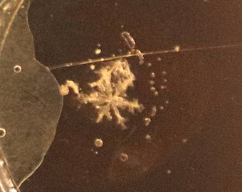 Real Snowflake Preserved on Microscope Slide - Bitcoin accepted