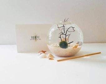 Japanese Marimo Aqua Terrarium, Globe Terrarium Kit, Desk Plant, Unique Gift