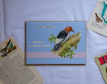 Stationery - Handmade Blank Greeting Card (Folded A6) - Red-Headed Woodpecker - Golden Guide to BIRDS