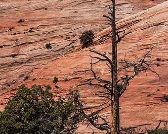 Tree against cliff. Zion National Park.