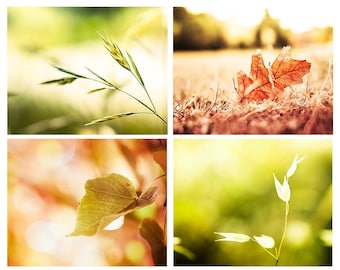 Botanical photography print set 8x10 8x12 autumn leaves photography fall fine art photography nature rustic country cottage wall art pumpki