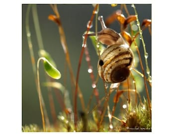 Snail Photograph Print Woodland Scene Forest Scene Magical Forest Bokeh PNW Gastropod Tiny Snail Blooming Moss Autumn Fall