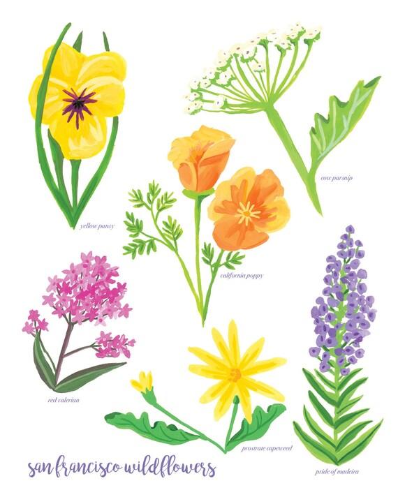 Bright Colorful Floral Print, San Francisco Bay Area Wildflowers, Botanical Illustration, Flower Art Print 8x10