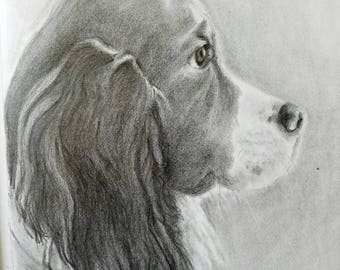 Customized Puppy Portrait Sketches In Graphite - Pet Portrait - custom portrait dog - animal custom portrait commission painting in Pencil