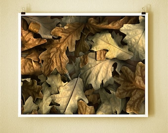 OAK - 8x10 Signed Fine Art Photograph