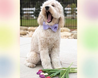 Monogrammed Bow Tie || Personalized Lavender Gingham Dog Bow Tie |•| The Best Puppy Dog Gifts by Three Spoiled Dogs