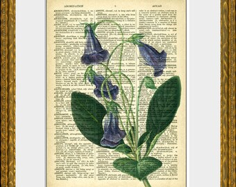BLUE BELL GLOXINIA recycled book page art print - an upcycled antique dictionary page with a retooled antique flower illustration - wall art