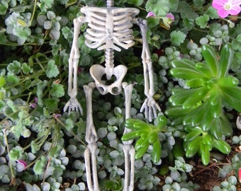 Halloween Skeleton-  miniature  skull