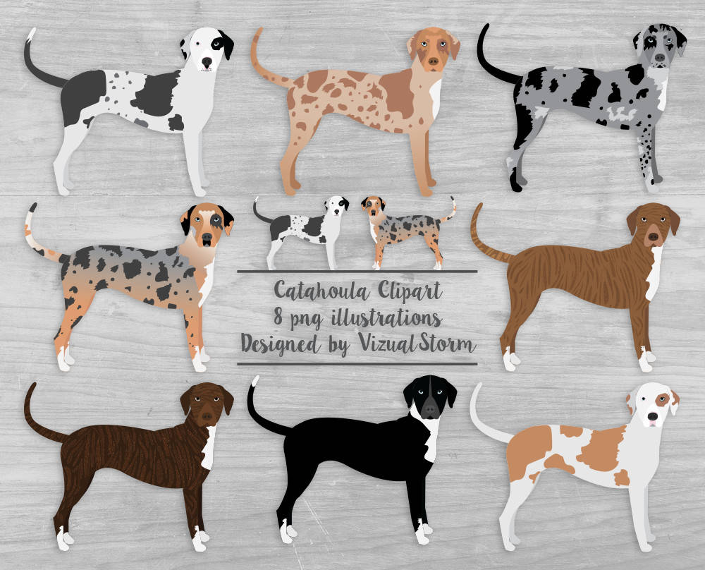 Dog Colors Brindle Black And White