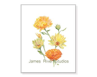Coreopsis Painting Coreopsis Print Coreopsis Art Coreopsis Watercolor Coreopsis Decor Coreopsis Wall Art Orange Coreopsis Yellow Coreopsis.