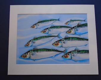 A4 Mackerel shoal Giclee art print plus mount