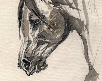 Arabian horse, equine art, horse portrait, equestrian,  original ink drawing