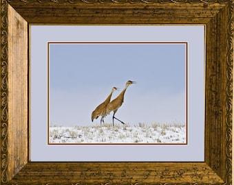 Sandhill Cranes, Original Fine Art Photography