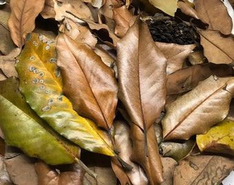 Untreated Magnolia Leaves - 2 gallons