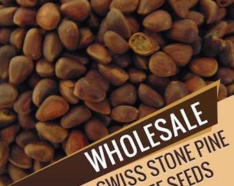 Wholesale Swiss Stone Pine Tree Seeds, Pinus Cembra, Var. Siberica