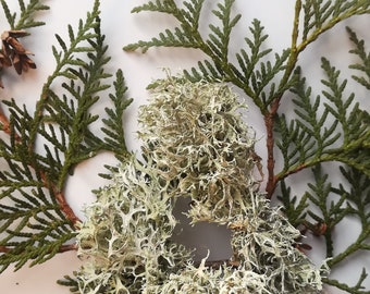 Dried lichen/ moss