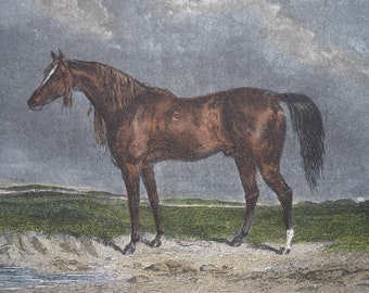 """19th Century Equine Hand Coloured Engraving Print """"COPENHAGEN"""" 1853 G.B Spalding, E.Hacker Published by Rogerson and Tuxford"""