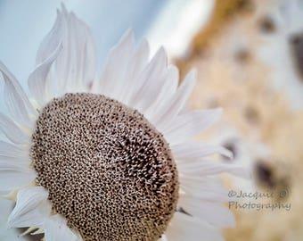 Bokehlicious Sunflowers