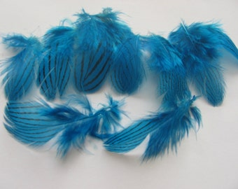 Silver Pheasant Feathers - Kingfisher Blue
