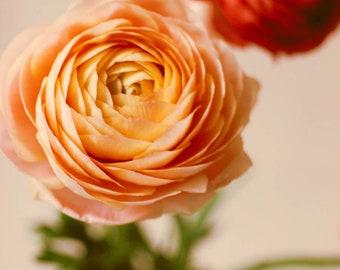 She Loved Flowers 2, pastel floral art print, baby nursery art, rose, peach pink art print, botanical art, fine art photography, cottage art