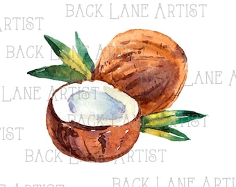 Fruits Coconut Watercolor Drawing Clipart Lineart Illustration Instant Download PNG JPG Digi Line Art Image Drawing Lb66