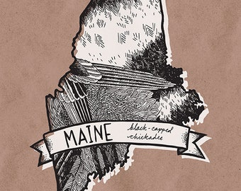 Maine State Bird Print- Black Capped Chickadee, 8x10 inches.