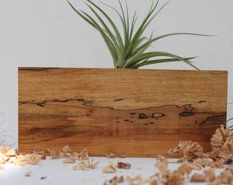 Spalted Maple Air Plant Holder  M 08