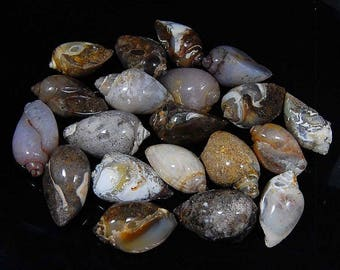 4130 CTS aaa 100% natural Vintage FOSSIL SHELL wholesale lot piece 47 loose gemstone cabochon size=25 to 45 mm (approx)
