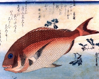 A Shoal of Fishes - Japanese Red Seabream, Repro Woodblock, Fine Art Picture Painting, Japanese Print By Hiroshige