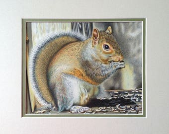 "Squirrel Colored pencil Original Painting 10""x8"" animal"
